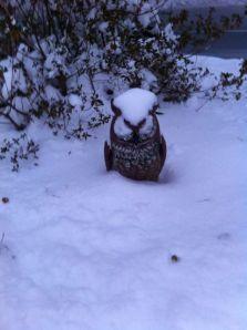 hedwig snow
