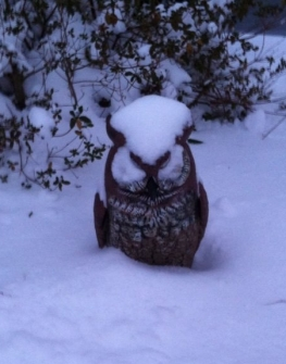 Hedwig in snow