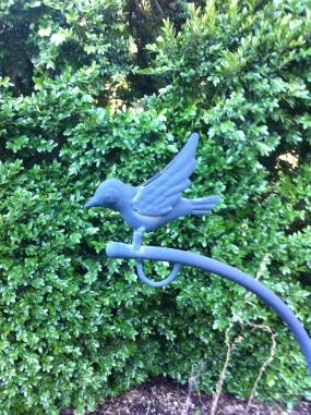 VCCA bird 1
